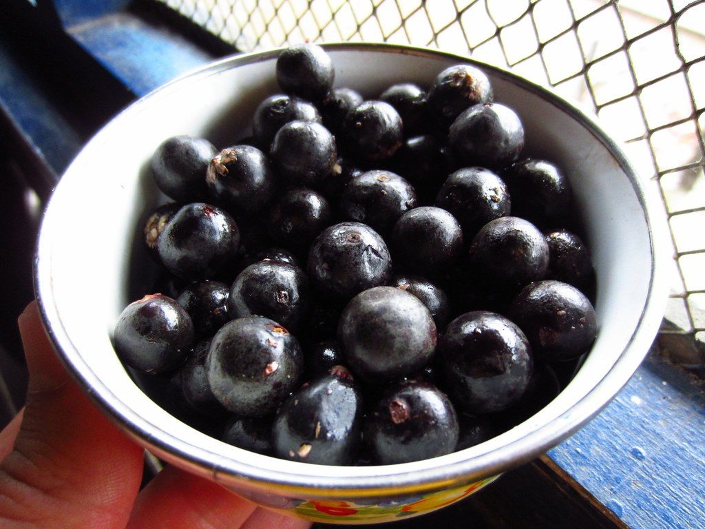 Some Significant Health Benefits Of Acai Berries